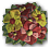 Nordblume icon.png