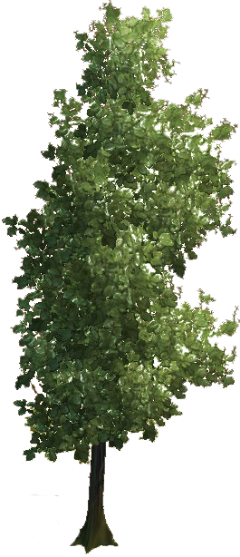 Baum Png